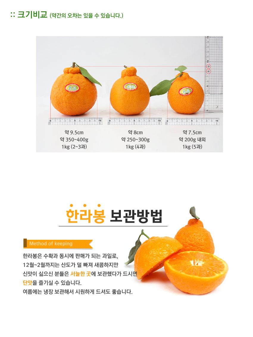 한라봉-크기비교.jpg
