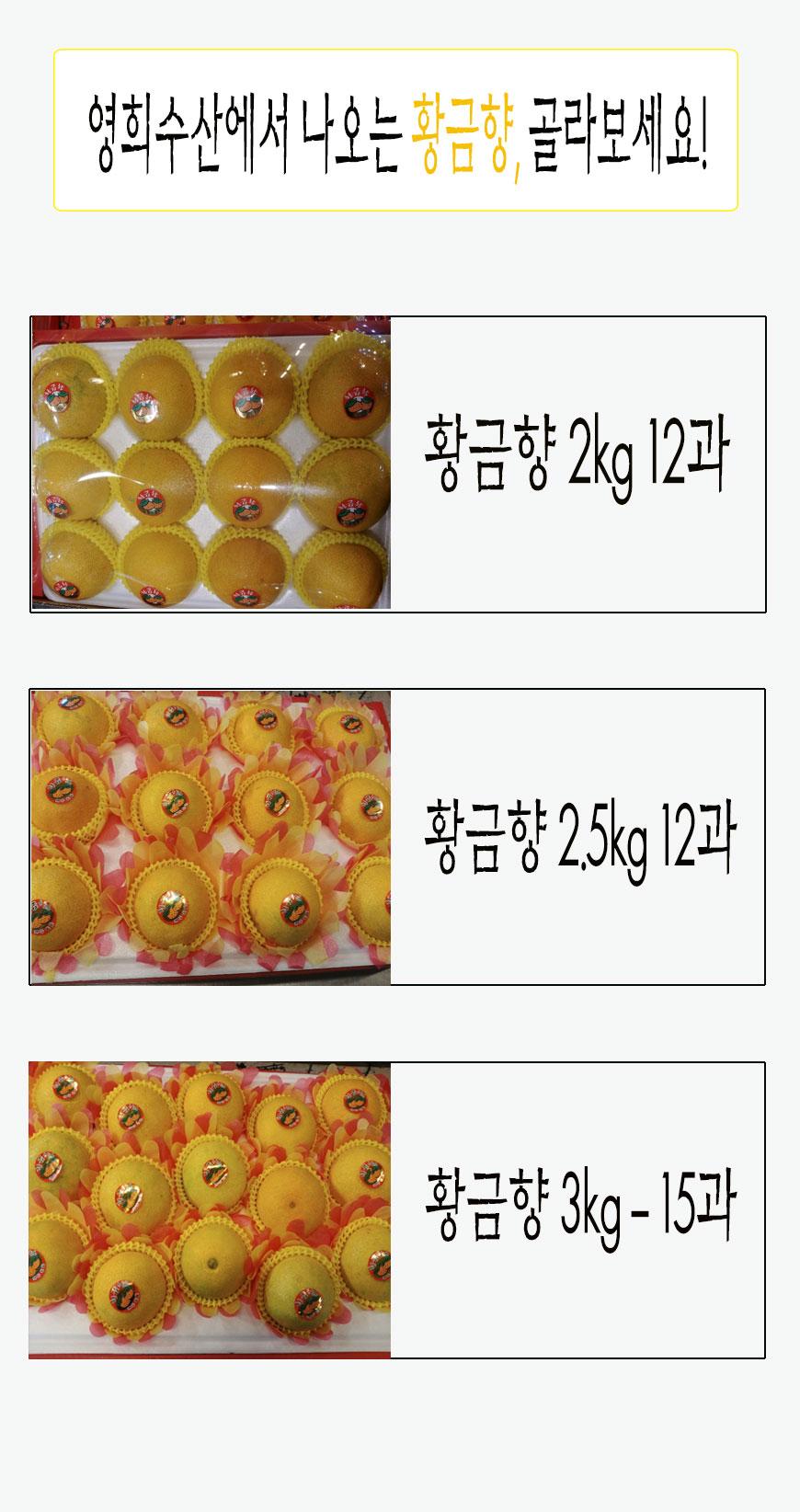 황금향소개.jpg
