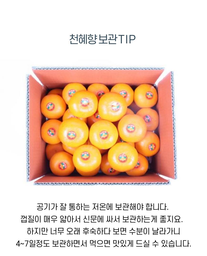 천혜향-영희-10.jpg