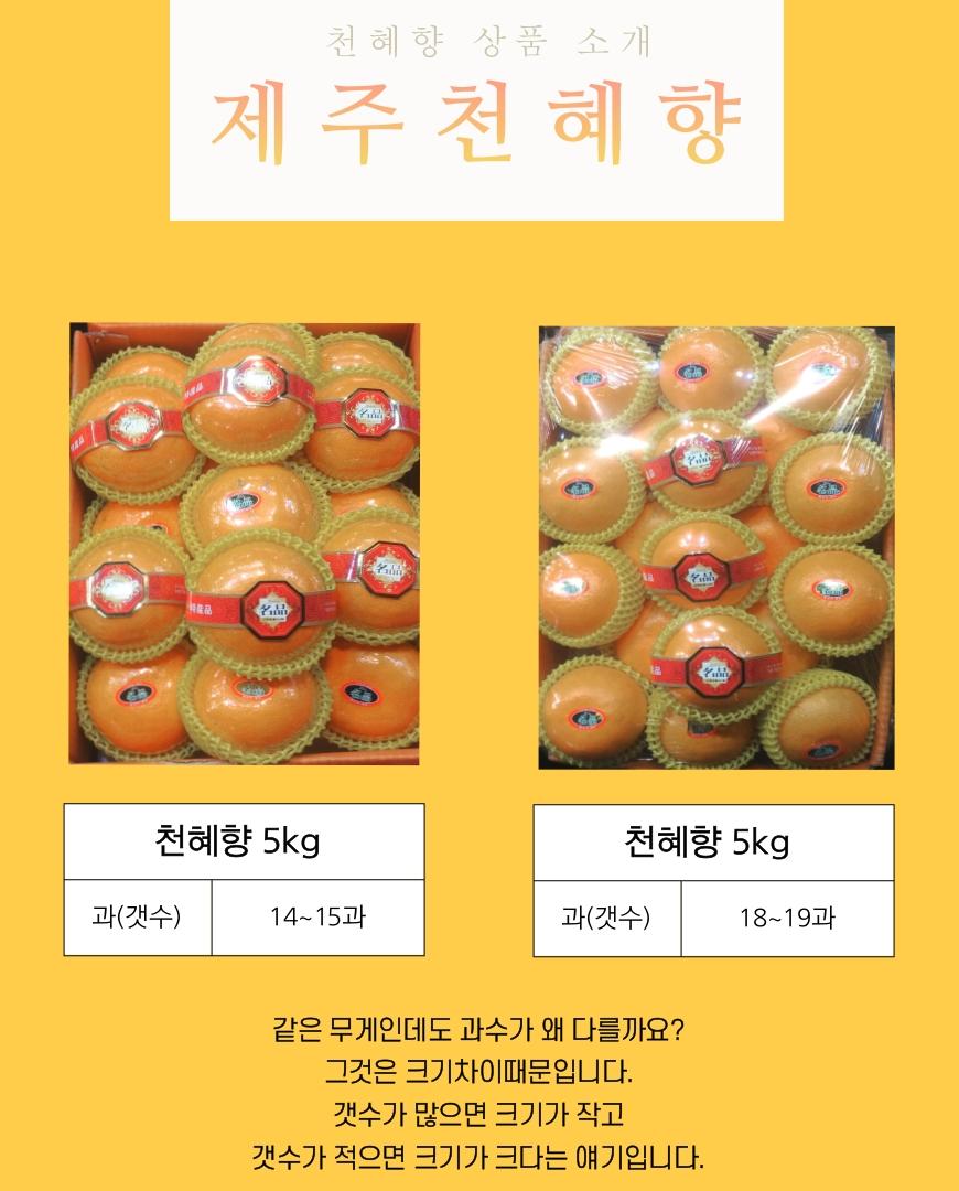 천혜향-영희-4.jpg