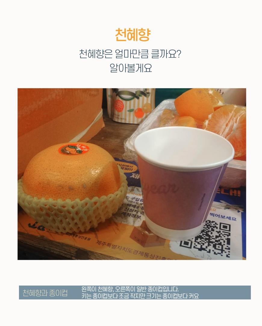 천혜향-영희-6.jpg